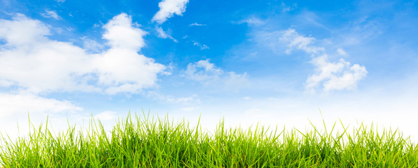 Spring nature background with grass and blue sky in the back  ,