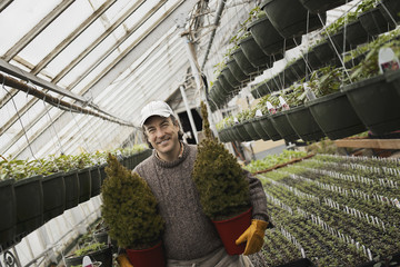 Spring growth in an organic plant nursery glasshouse. A man holding two young conifer shrubs in pots.