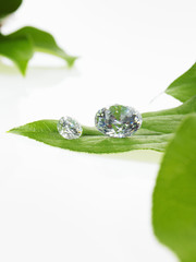 A single leaf with veins, and small clear glass beads or objects, with facets which reflect light.