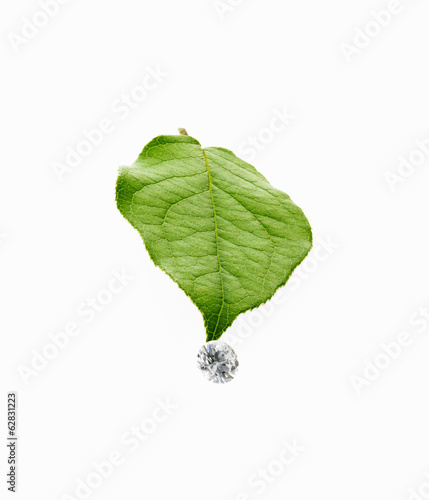 A single leaf with veins, and a small clear glass bead or objects, with facets which reflect light.