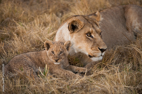 African lion and cub, Duba Plains, Botswana