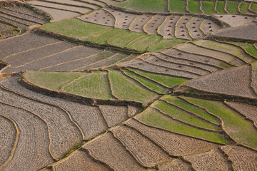 Cultivated terraced fields, Paro Valley, Bhutan
