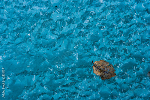 Leaf on ice, Arctic National Wildlife Refuge, Alaska, USA
