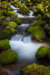 Rainforest stream, Olympic National Park, Washington