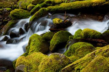 Barnes Creek, Olympic National Park, Washington, USA