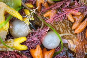 Seaweed, kelp, and sea shells on the coast of Alaska.