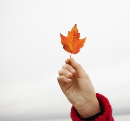 A day out at Ashokan lake. A young girl in a red winter knitted jumper holding up a maple leaf.