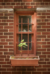 The exterior wall of a city apartment building in New York, a narrow window with a single plant in a windowbox.
