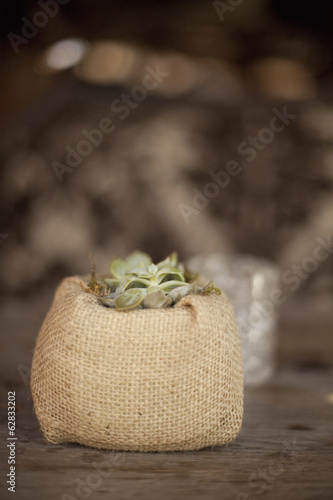 A small succulent plant in a container covered with hessian, on a dining table.