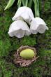 Easter egg in nest on green grass background