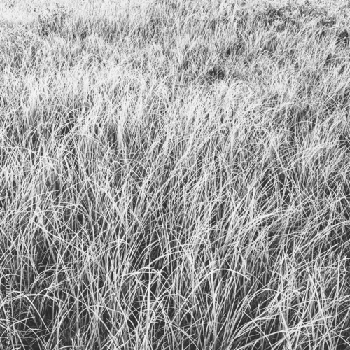 Frost covered grasses in a meadow in Mount Rainier national park.