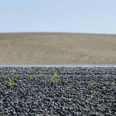 Close up of weeds growing on the roadside, and a view to farmland, near Pullman, in Washington state, USA