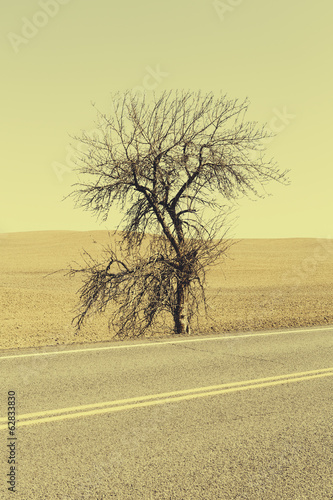 A Cottonwood tree at the roadside in a landscape of ploughed fields near Pullman in Washington state.