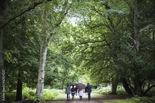 A group of people holding umbrellas, walking along a path through woodland and mature trees in leaf.