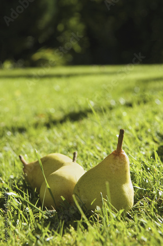 Pears lying in the grass on a farm.