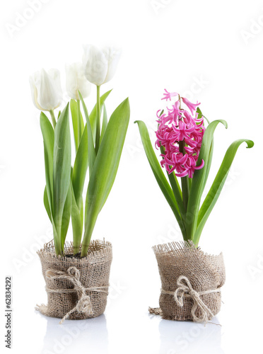 Beautiful tulips and hyacinth flower isolated on white