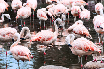 Flamingos have arrived, San Climente, Argentina