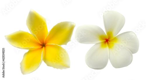 Foto op Canvas Frangipani Tropical flowers frangipani (plumeria) isolated on white backgro