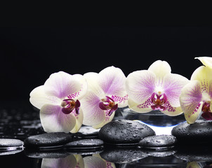 orchid on wet pebble