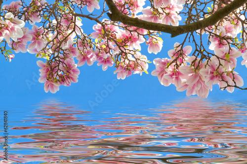 Keuken foto achterwand Magnolia Magnolien am Wasser