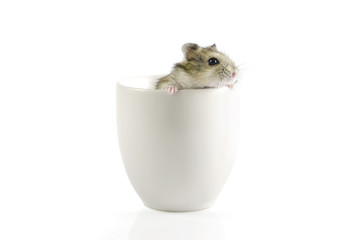 Little lovely hamster going out a cup : Clipping path included