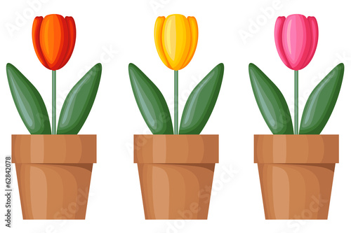 Multicolor tulips in pots