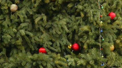 xmas tree background