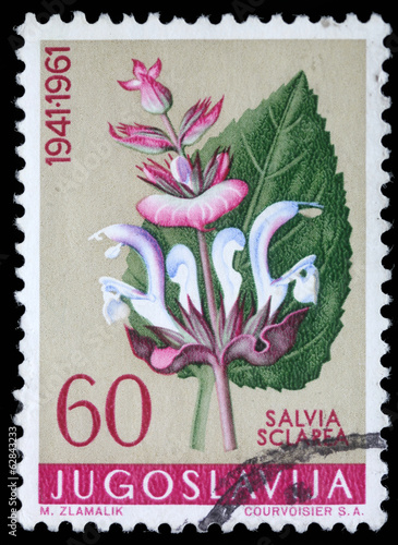 Stamp printed in Yugoslavia shows clary sage, circa 1961