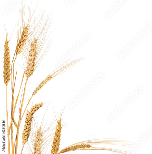 composition with isolated corner from ears of cereals