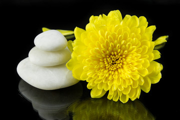 Yellow chrysanthemum and pile of white stone.