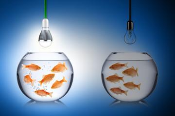 fish energy