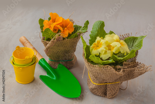 Yellow primrose small shovel and decorative bucket
