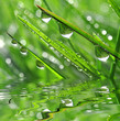 Water drop on green grass close up