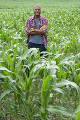 A man standing in a field of corn, on an organic farm.