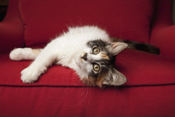 A kitten on a red sofa, lying on its side.