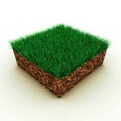 grass on soil
