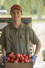 Organic farmer, young man holding baskets of fresh fruit at a market farm stand.