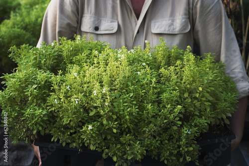 A person holding a tray of young plants, at an organic farm.