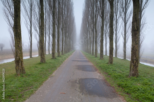bike road between tree rows in fog