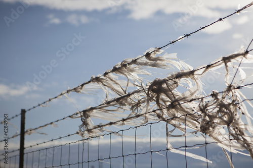 Plastic bags caught on a barbed wire fence