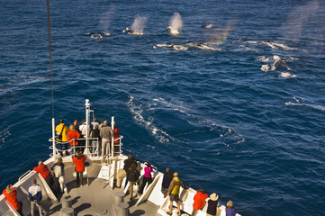 Tourists watching fin whales, Balaenoptera physalus, from a cruise ship, off the coast of South Georgia Island in the Falkland Islands.