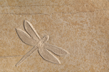 A complete Dragonfly fossil on a smooth piece of stone. Solnhofen, Germany.