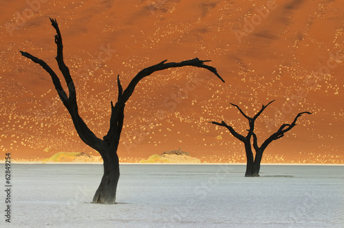 Dead camelthorn trees, Acacia erioloba, near Sossusvlei in the desert landscape of the Namib-Naukluft National Park, Namibia