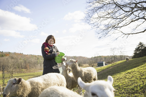 A woman with a bucket feeding the sheep at an animal sanctuary. A small group of animals.