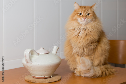 cat next to a teapot