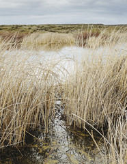 Tall reed grasses and marshes in Columbia National Wildlife Refuge, near Othello in Washington in the USA.