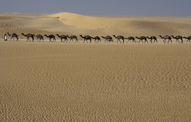 Camel train, Mali