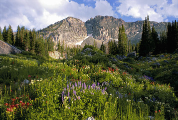 Landscape of Little Cottonwood Canyon, with the Devil's Castle mountain peak, in the Wasatch mountain range. Wild flowers in tall grass.