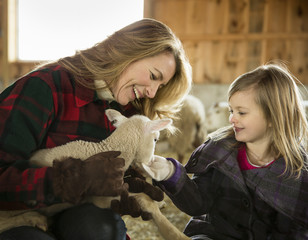 An Organic Farm in Winter in Cold Spring, New York State. Livestock overwintering. A woman and a child stroking a small lamb.