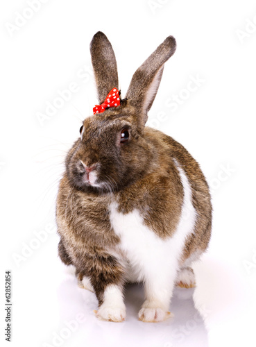 rabbit with small bow